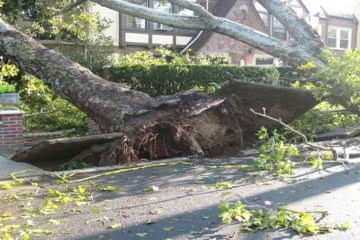 Storm Damage and Prevention Services