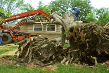 Stump Removal and Grinding Service