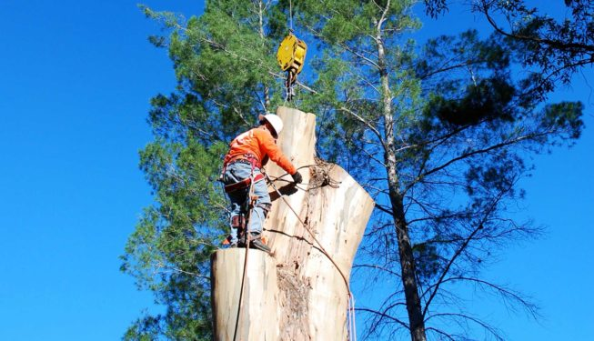 Tree Removal and Chipping Service